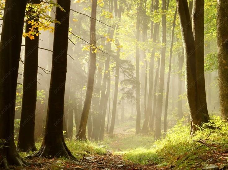 Леса, деревья